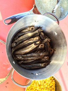 Oolichan feast: Freshly caught and steamed forage fish in Wuikinuxv.